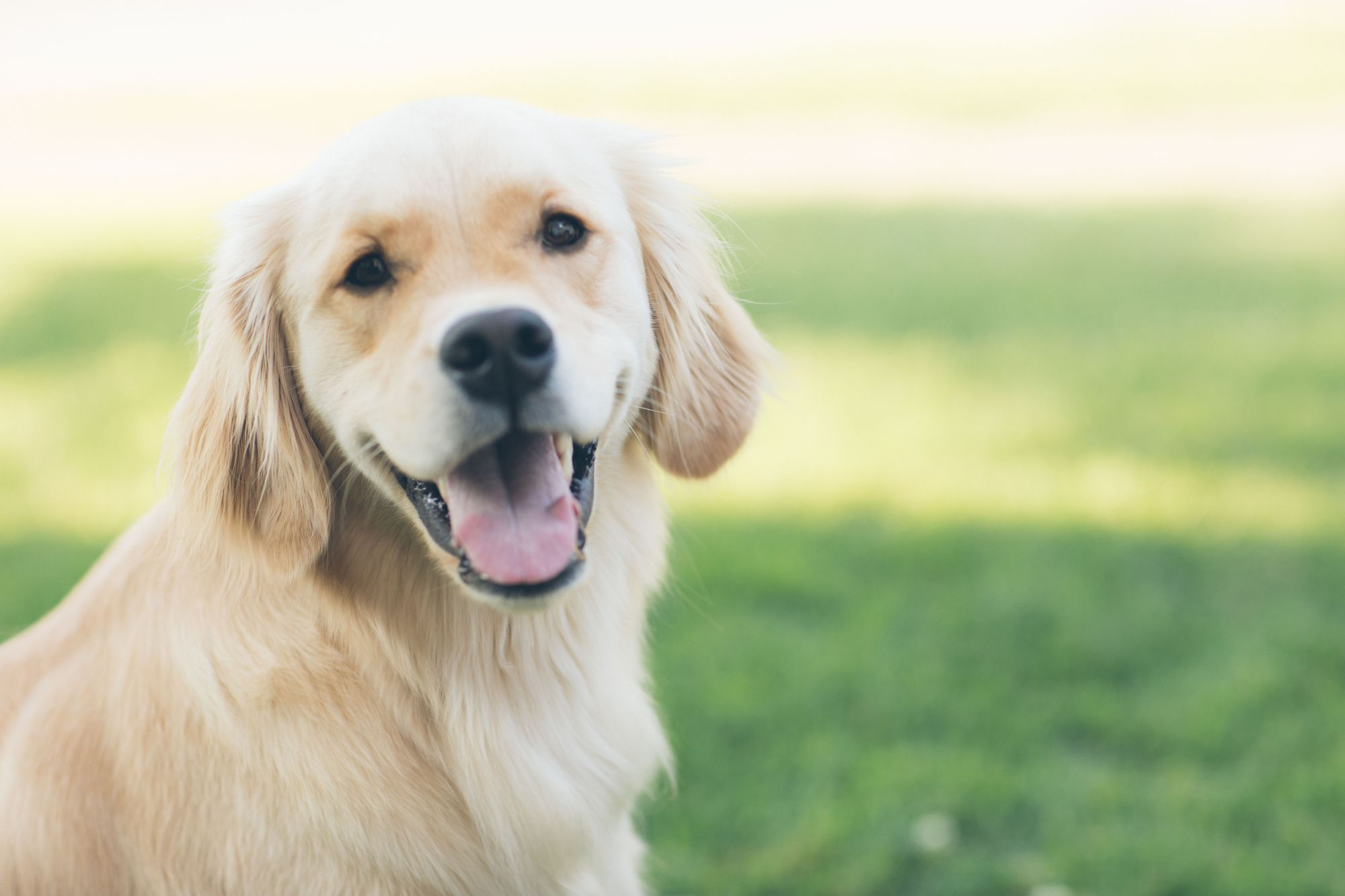 How to brush a dog's teeth: Dog smiling at photographer