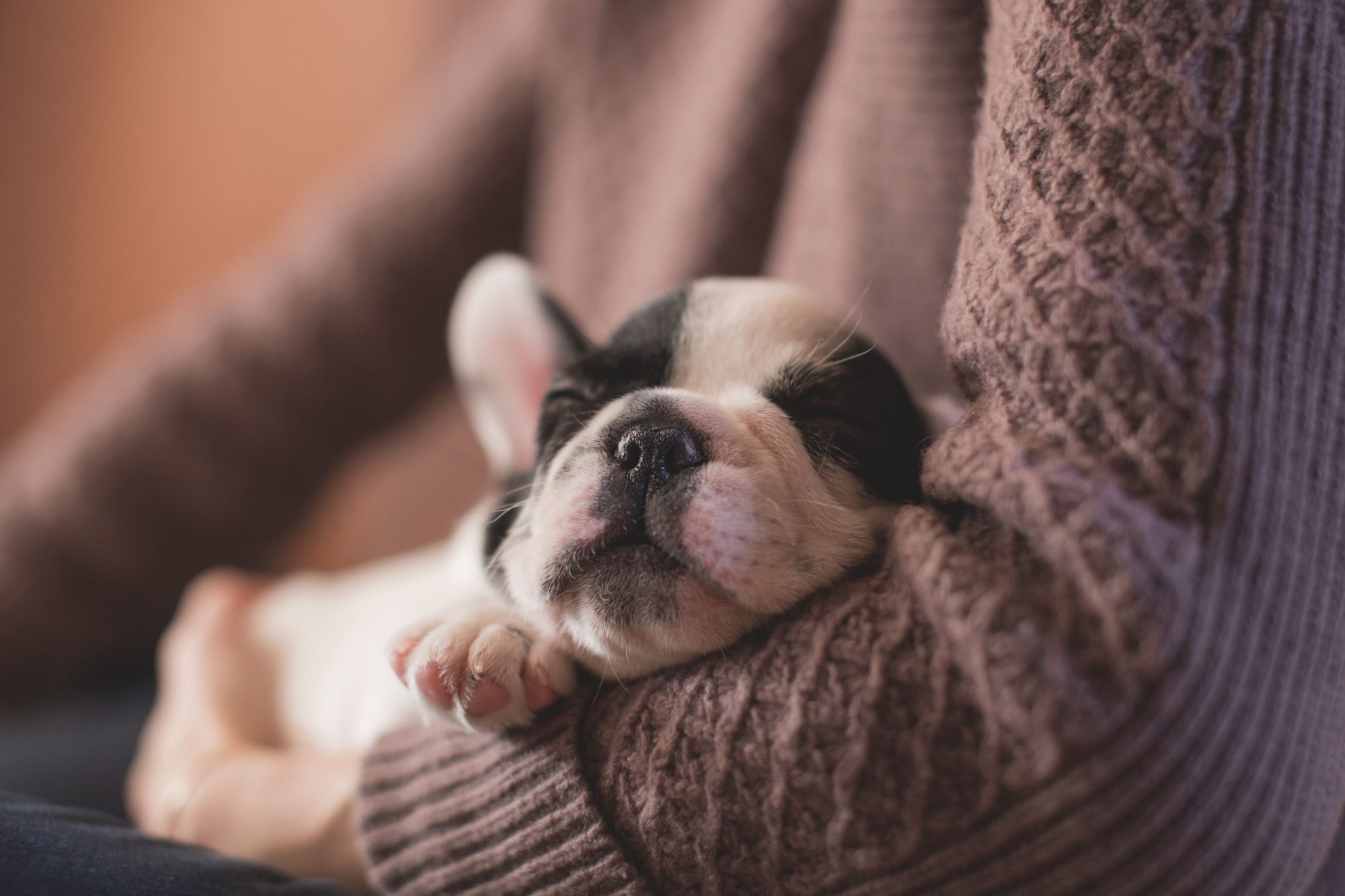 How to Cut Dog Nails: Puppy Sleeping Peacefully in Owner's Arms