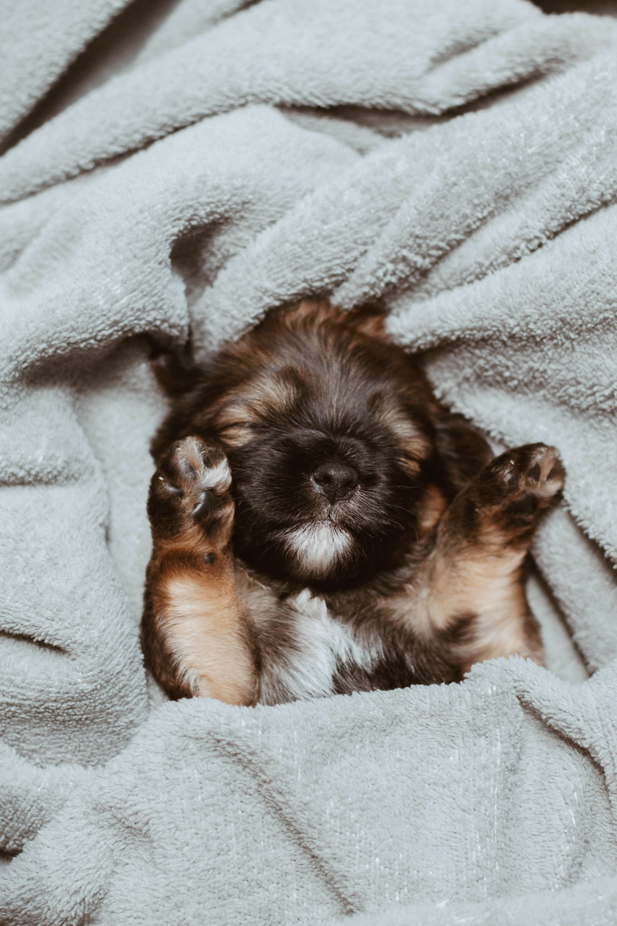 What Is Parvo? Puppy Sleeping on Its Back