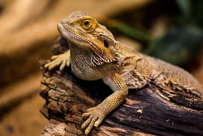 Exotic Pets List: Legal Pets You Can Own