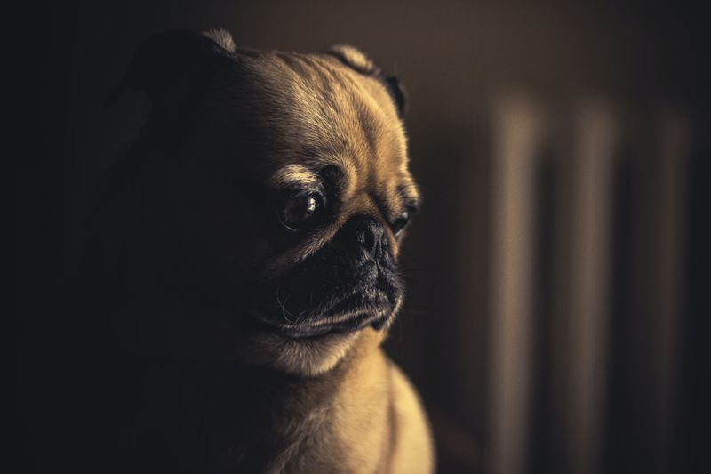 Dog Anxiety: Understanding and Helping Your Dog Cope With Stress