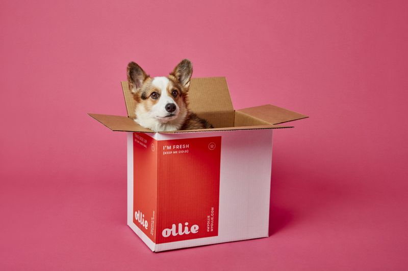 Ollie Dog Food Review 2020 | The Best Subscription Box for Your Pup