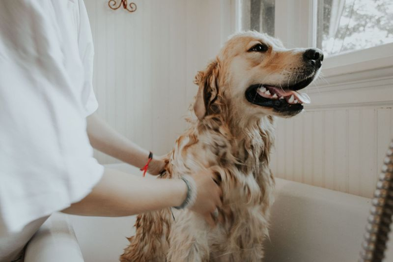 Dog Grooming at Home: The Go-To Guide for Grooming Your Pup
