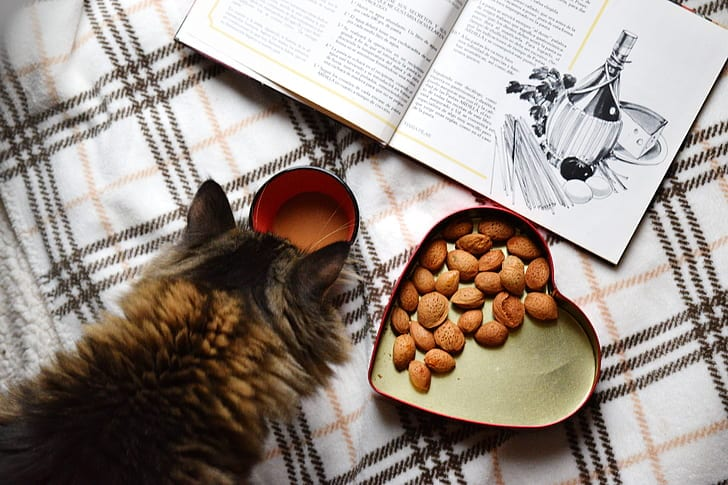 Brown fluffy tabby cat sniffing at coffee cup with heart shaped tin with nuts sits beside it, and a book opened.