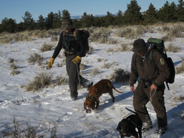 Two men in green uniforms and cold weather gear are using 2 hounds to track in the snow