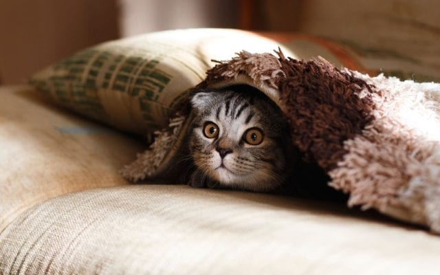 common diseases in cats
