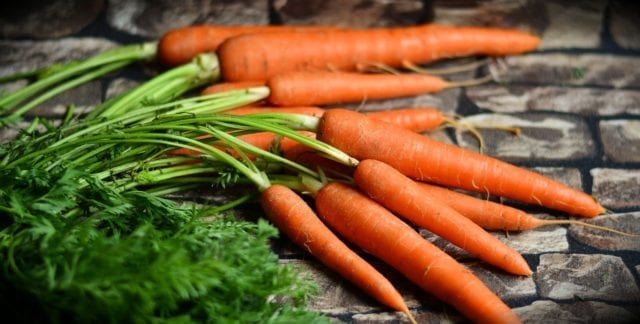 carrots, can dogs eat carrots