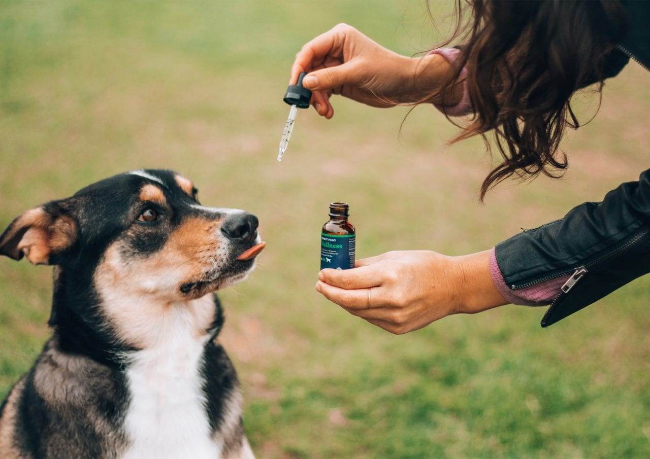 Owner giving dog CBD for dogs