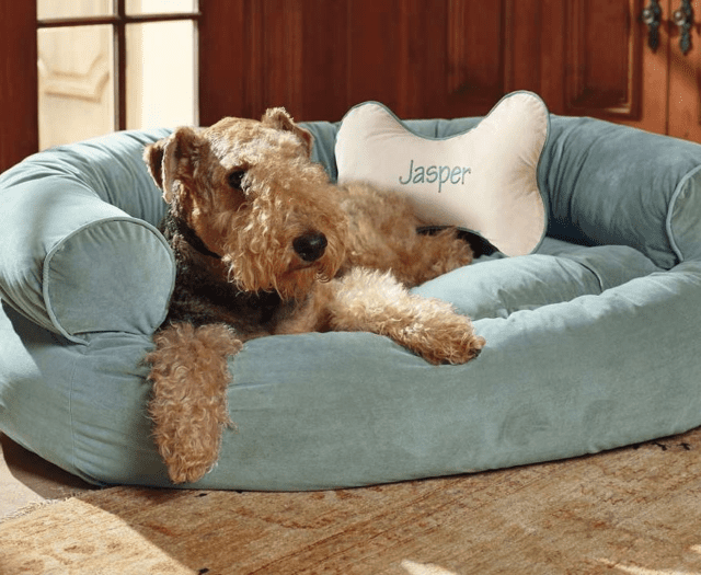 7 Tips How To Pamper Your Dog